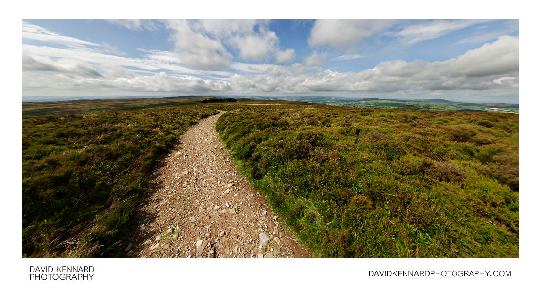 Path and heather