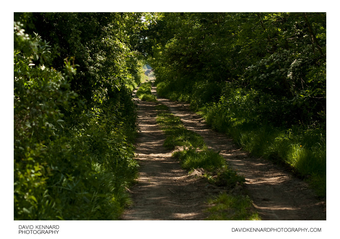 Leafy track