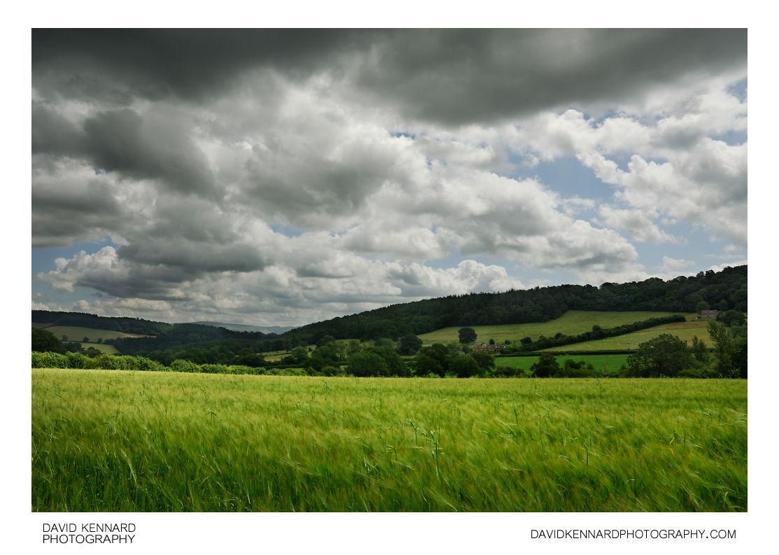 Green Barley