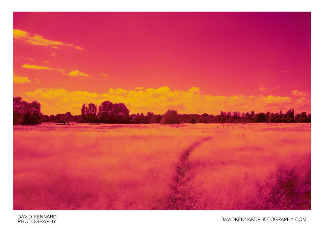 Hay field between Lubenham and Harborough  (near IR)