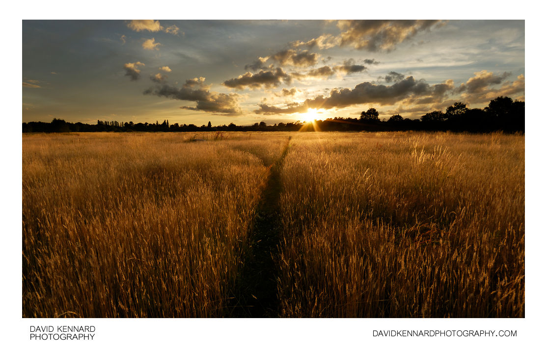 Harborough Hay field at sunset