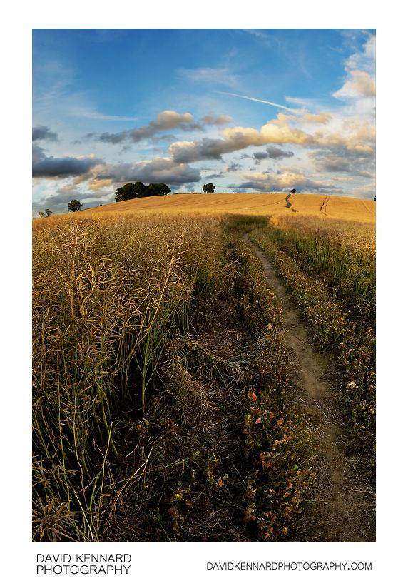 Path over Lubenham hill near sunset