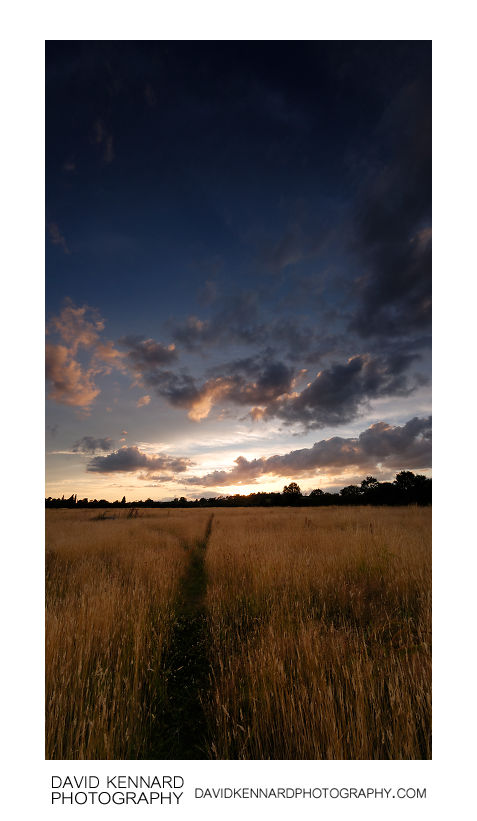Harborough Hay field at sunset