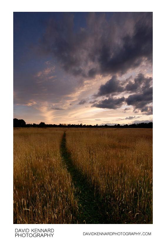 Harborough Hay field at twilight