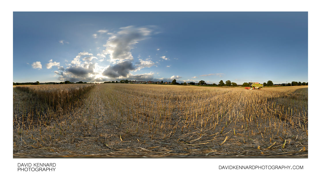 Partially harvested field of oilseed rape