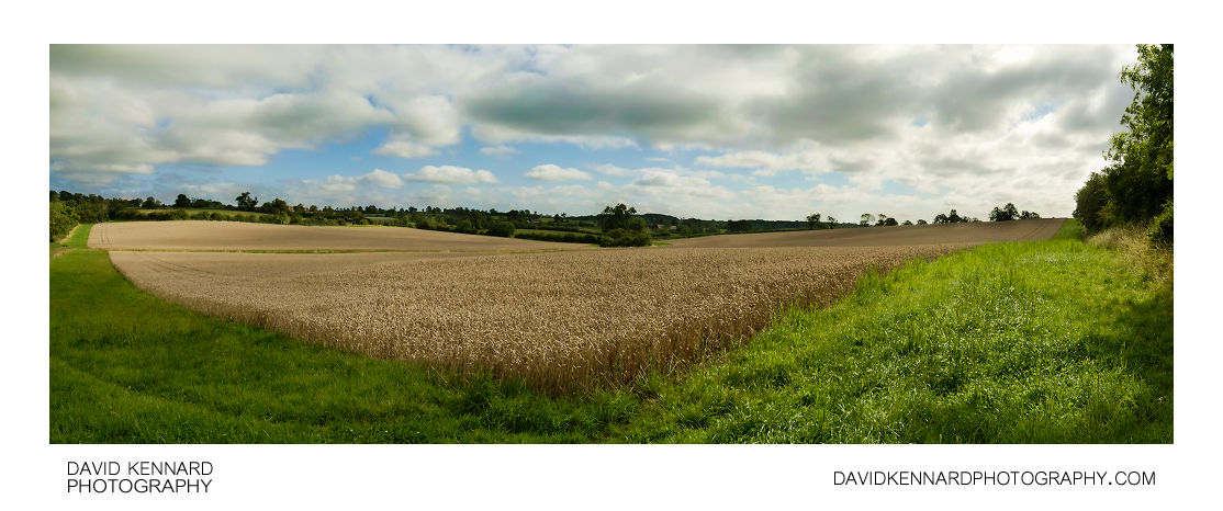 Field of wheat and cloudy sky