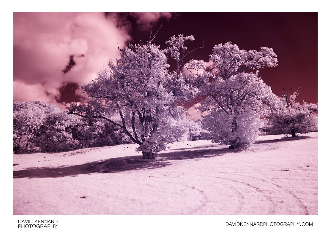 Trees in Infrared at Corby Boating Lake