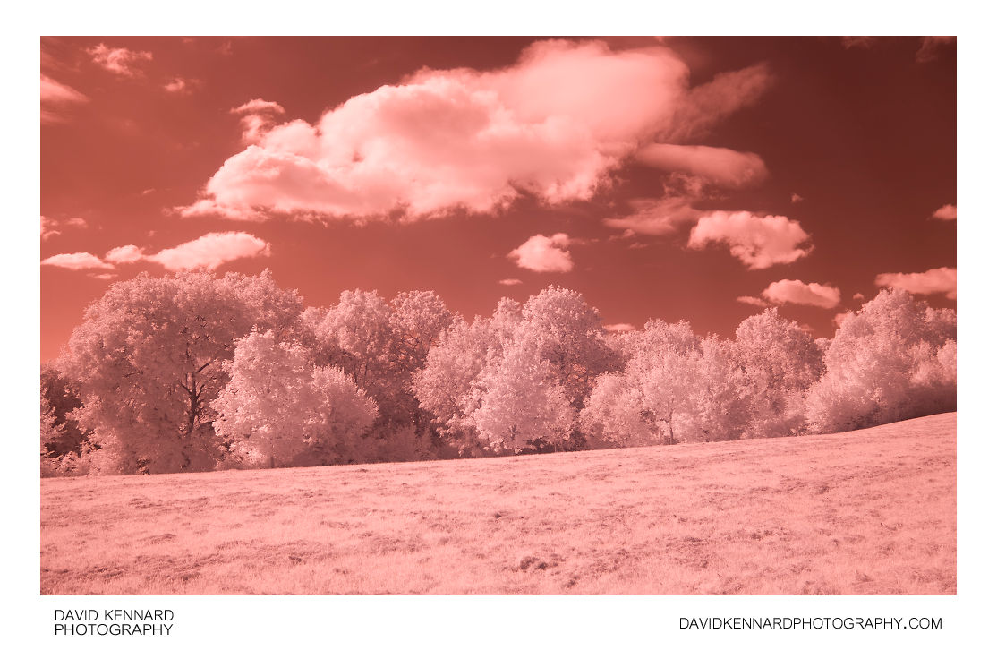 Trees, Grass, and Clouds in Infrared