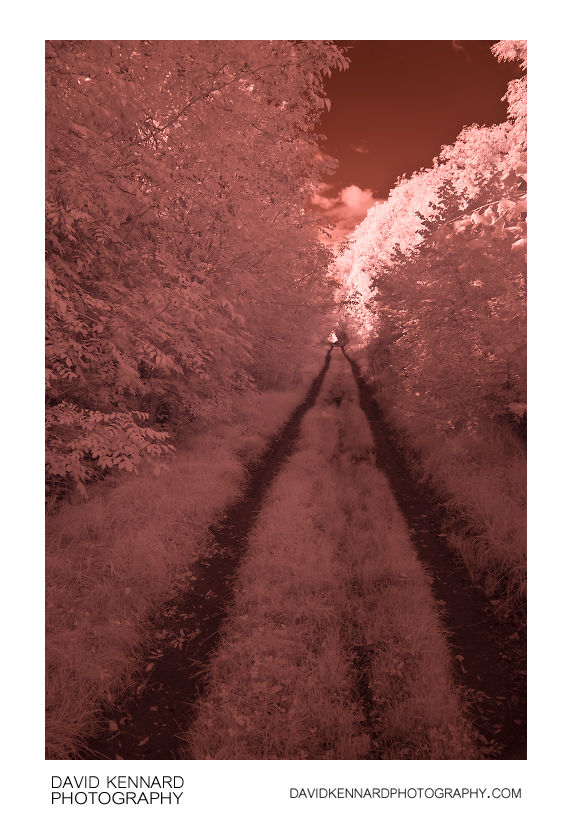 The old railway line in Infrared