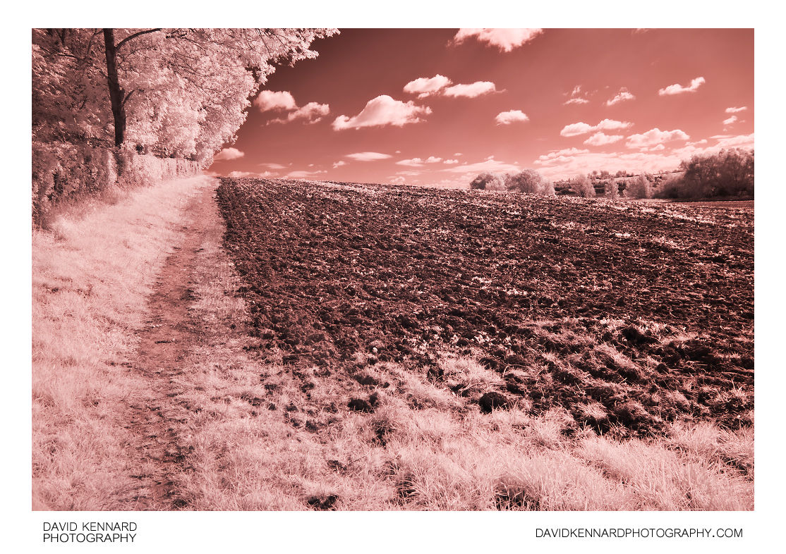 Path by ploughed field in Infrared