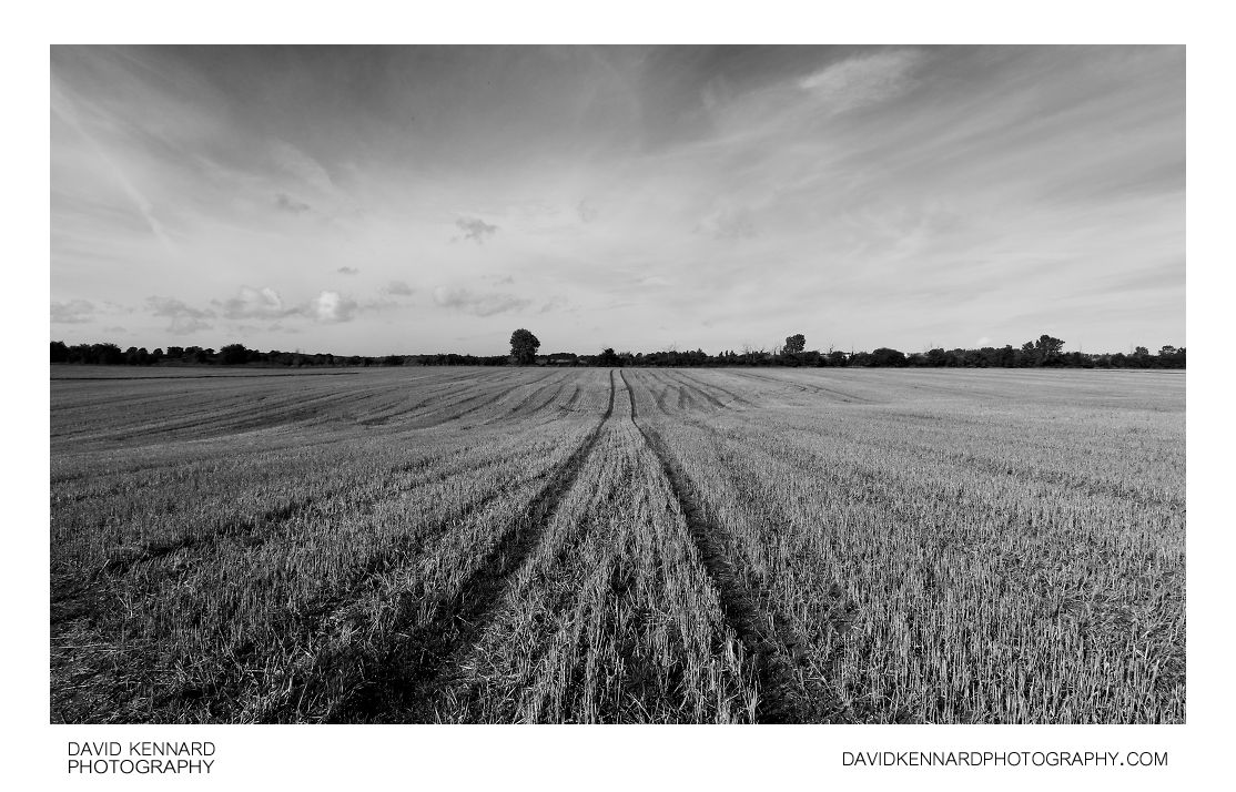 Harvested field, Harborough