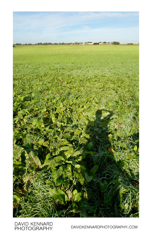 Shadow on field, Harborough