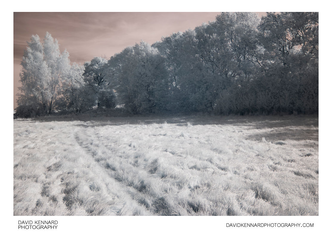 Grassy field, Harborough, in infrared