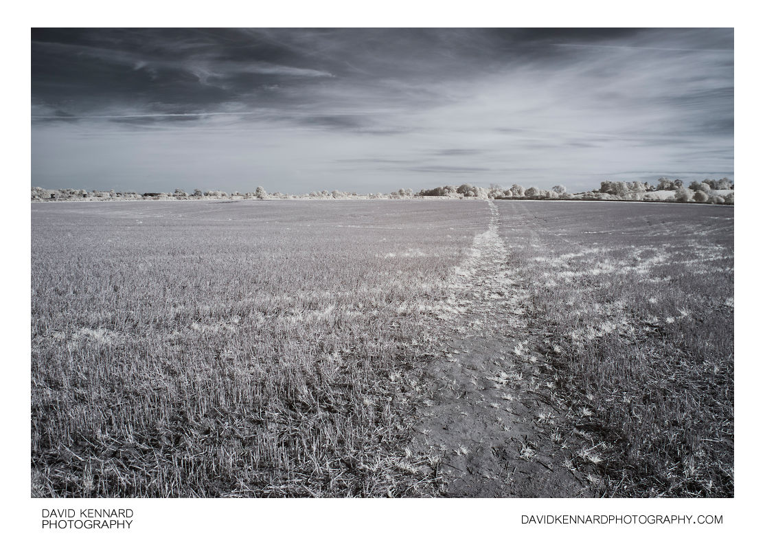 Path across harvested field in infrared