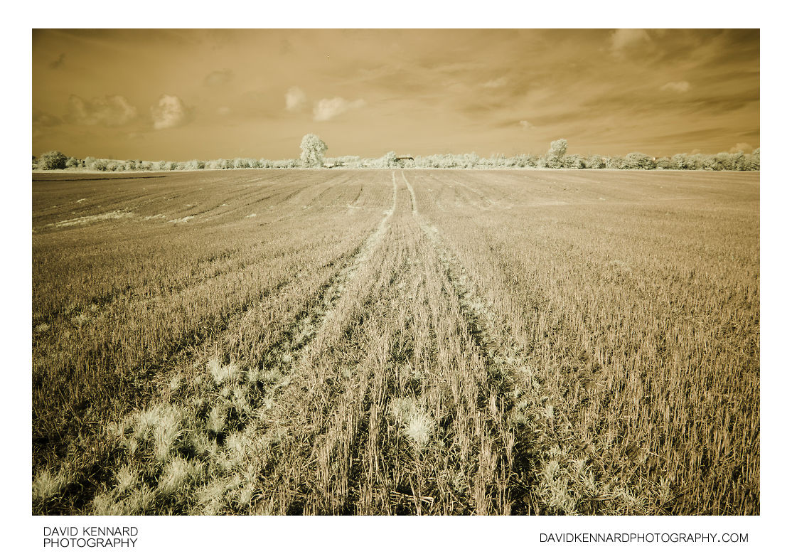 Harvested field, Harborough, in infrared