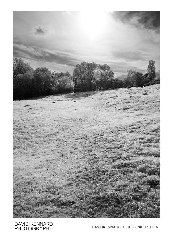 Grassy field B&W infrared