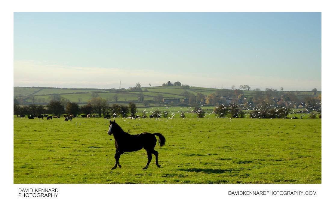 Running horse and gulls