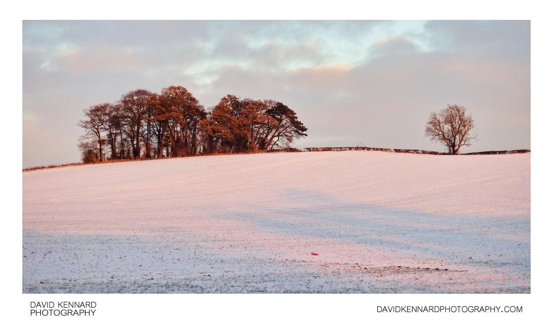 Trees on Lubenham Hill in the snow