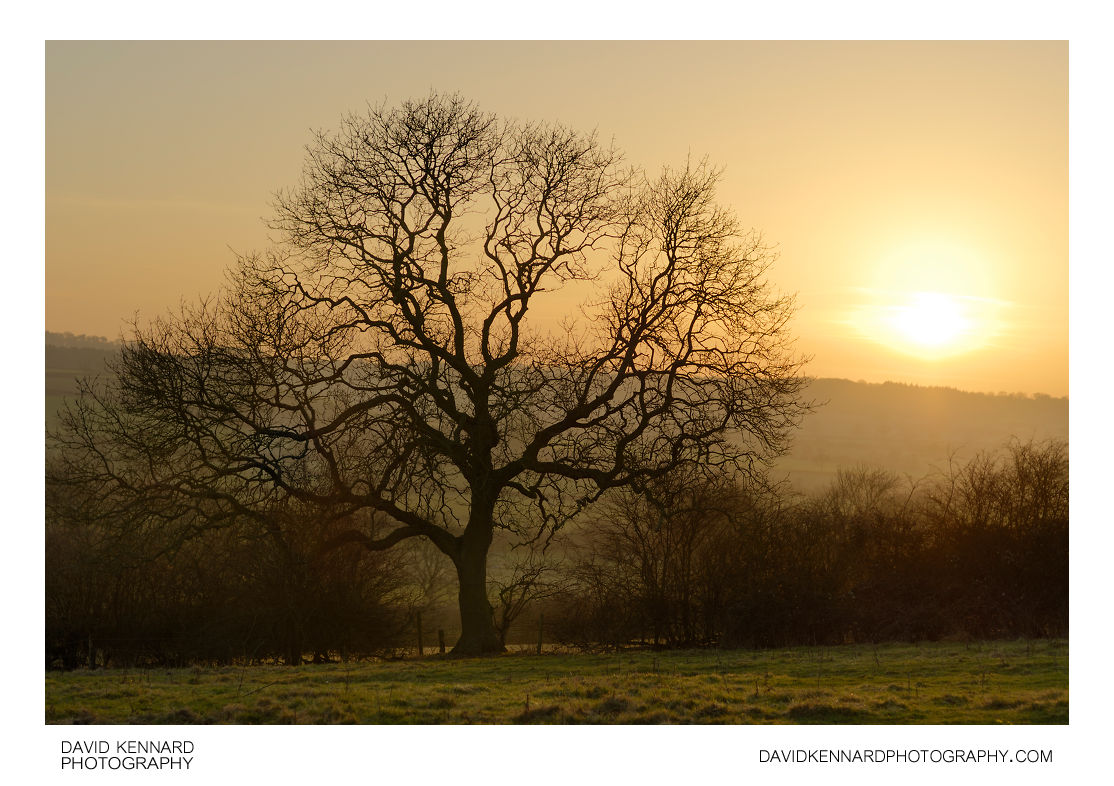 Bare tree and winter sunset