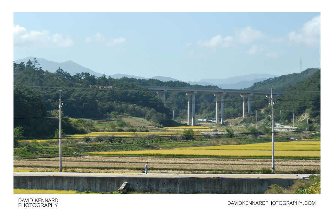 Rice fields of Sangyanghyeol-ri