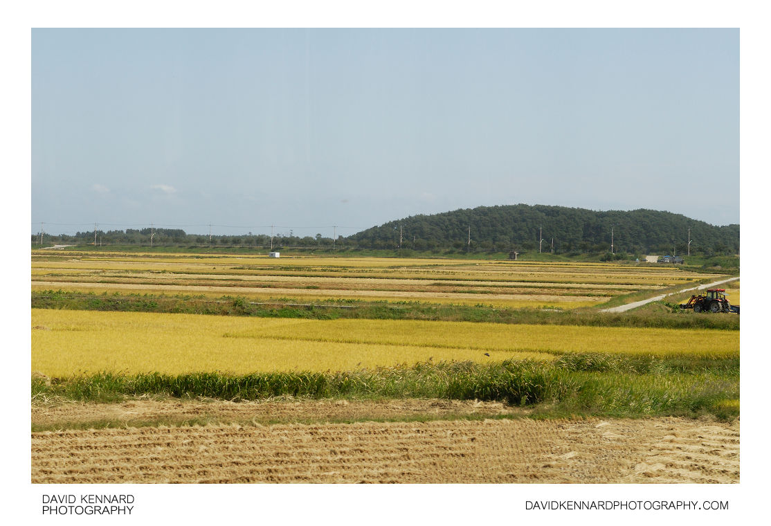 Rice fields, Josan-ri