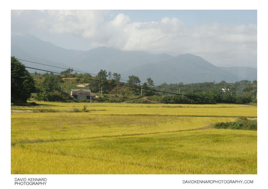 Rice fields, Powol-ri
