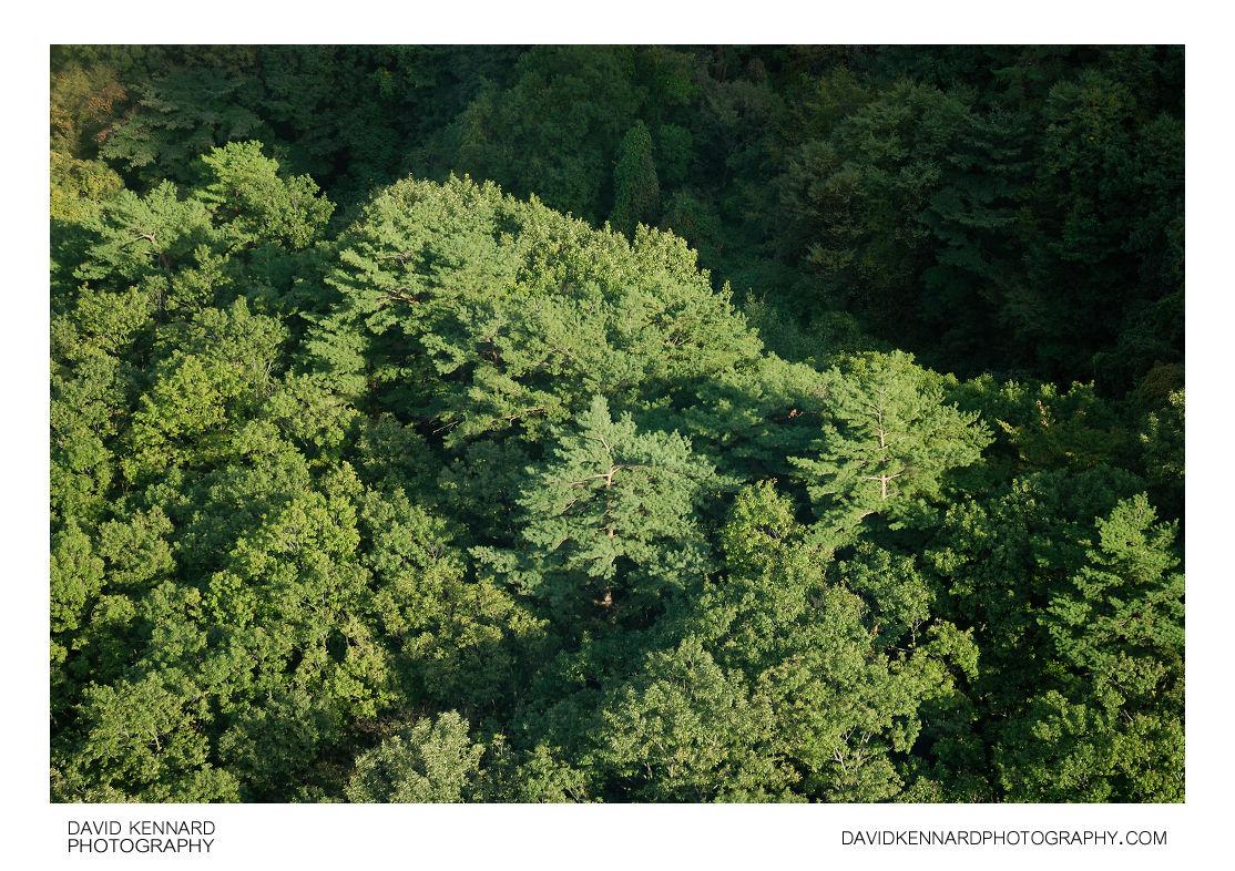 Green trees on Soraksan