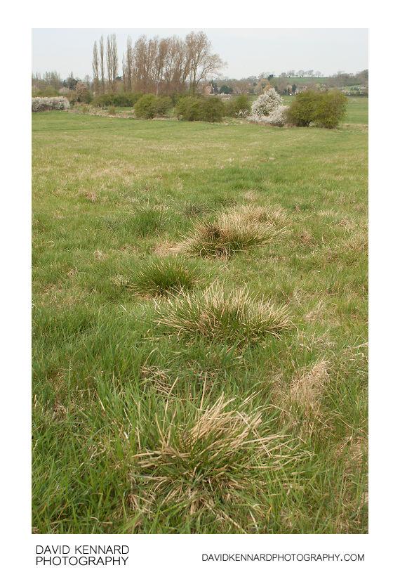 Ridge and furrow field, Marston Trussell