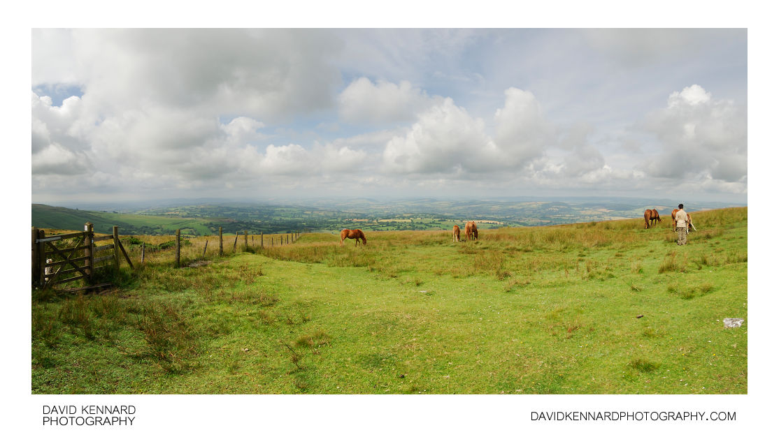 Horses on Brown Clee Hill
