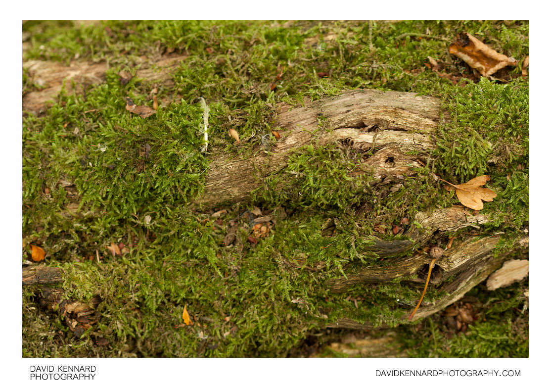 Moss covered old log