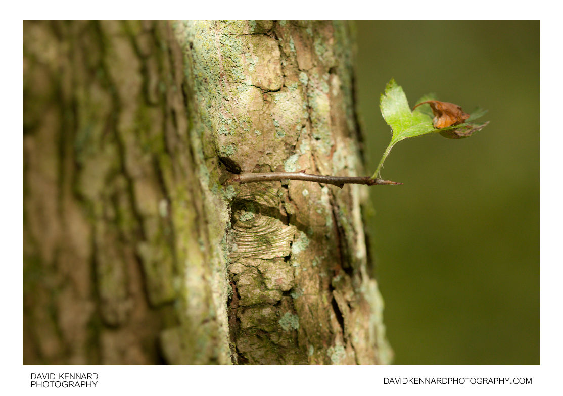 Small green leaf and old tree trunk
