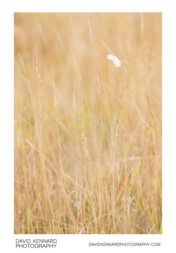 Dead grass and feather
