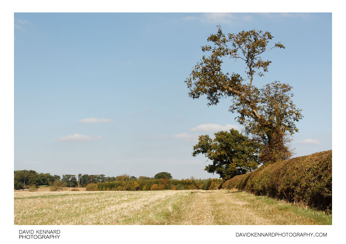 Tree and field, East Farndon