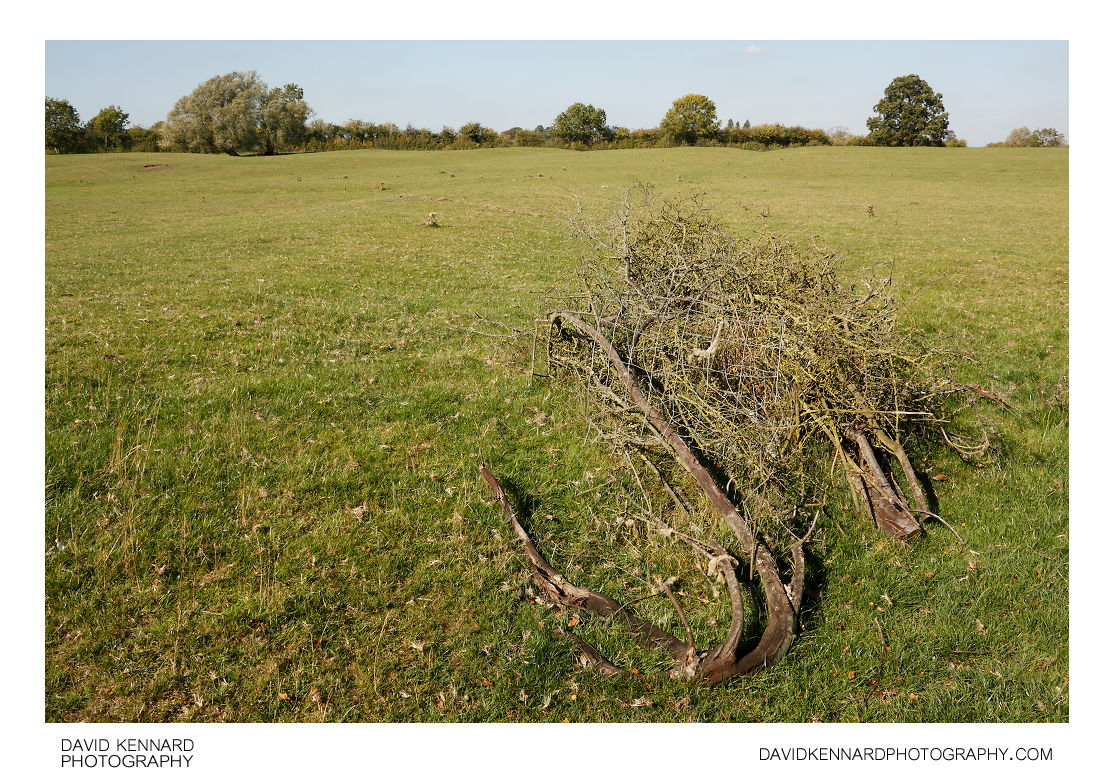 Pile of branches in field