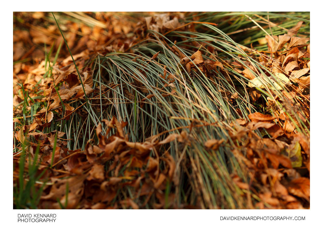 Rushes and dead leaves