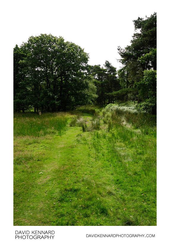 Marshy grass