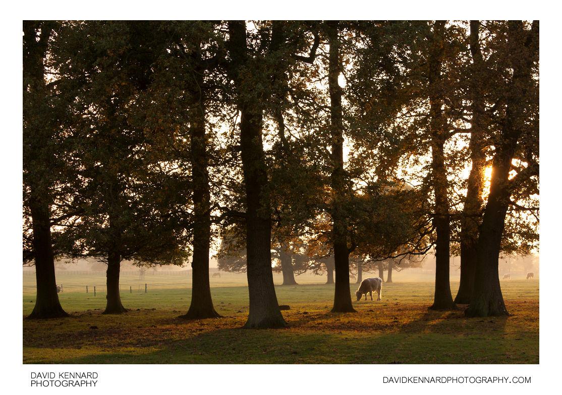 Trees and autumn mist at Thorpe Lubenham