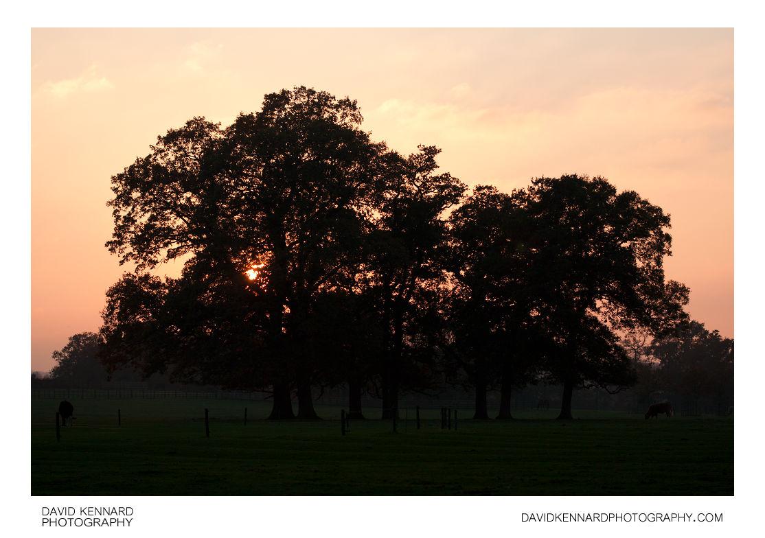 Sunset at Thorpe Lubenham