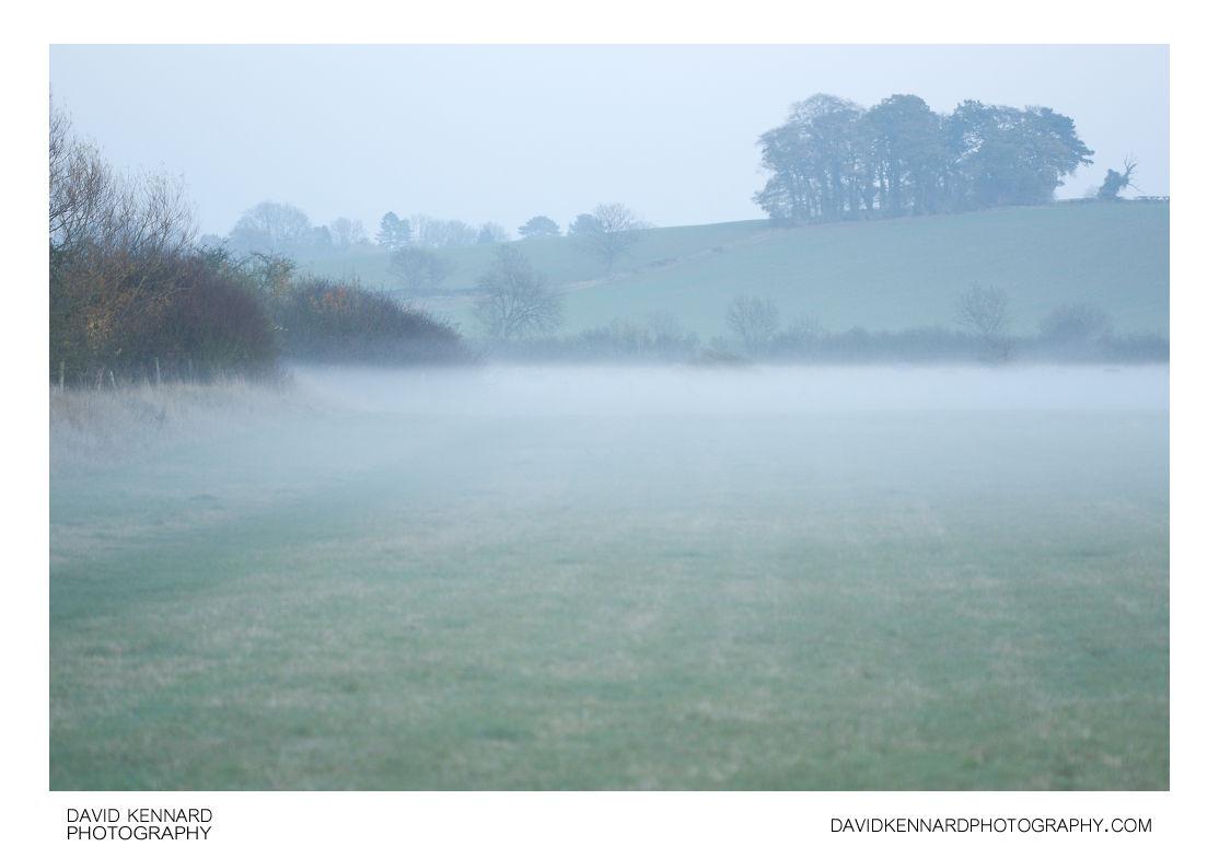 Mist filled field