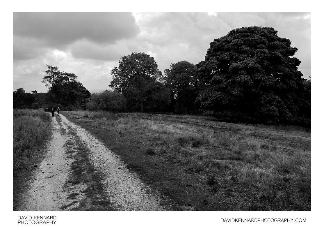 Track, Grass, Trees