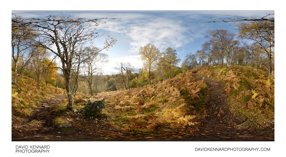 Woodland near foot of Meall Fuar-mhonaidh in autumn
