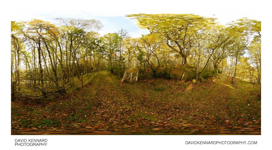 Autumn Woodland near Loch Ness