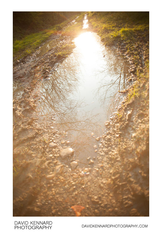 Puddles on the old railway line
