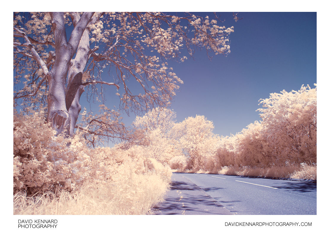Dingley Road in Infrared