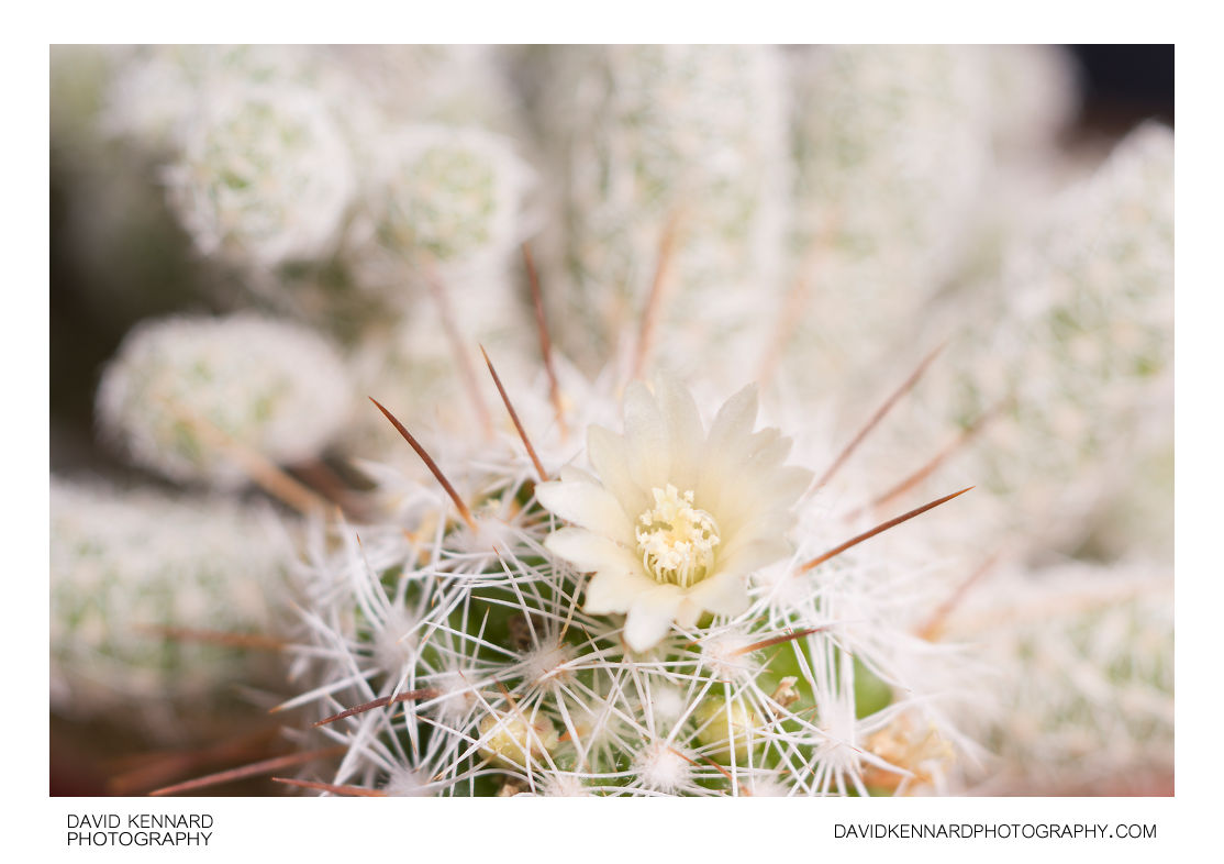 Small cactus flower