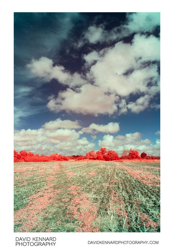 [EIR / Aerochrome] Path across field