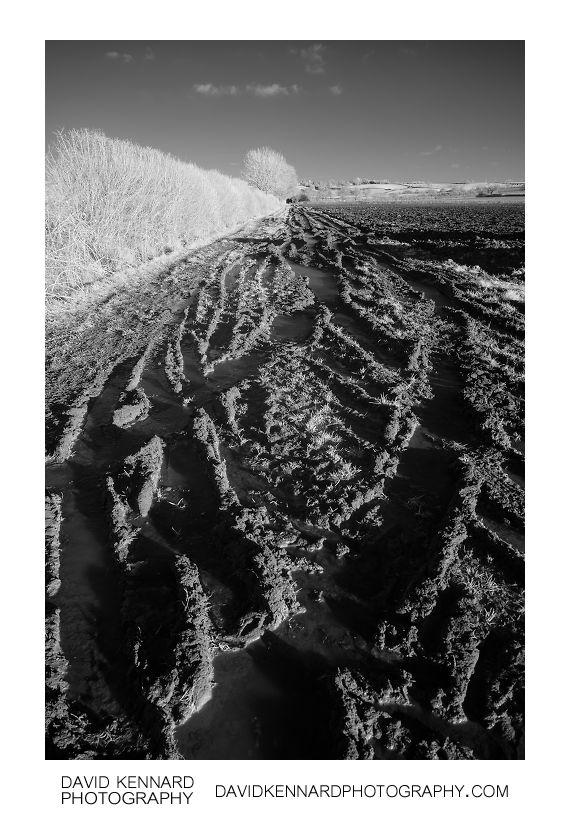 Muddy track in IR