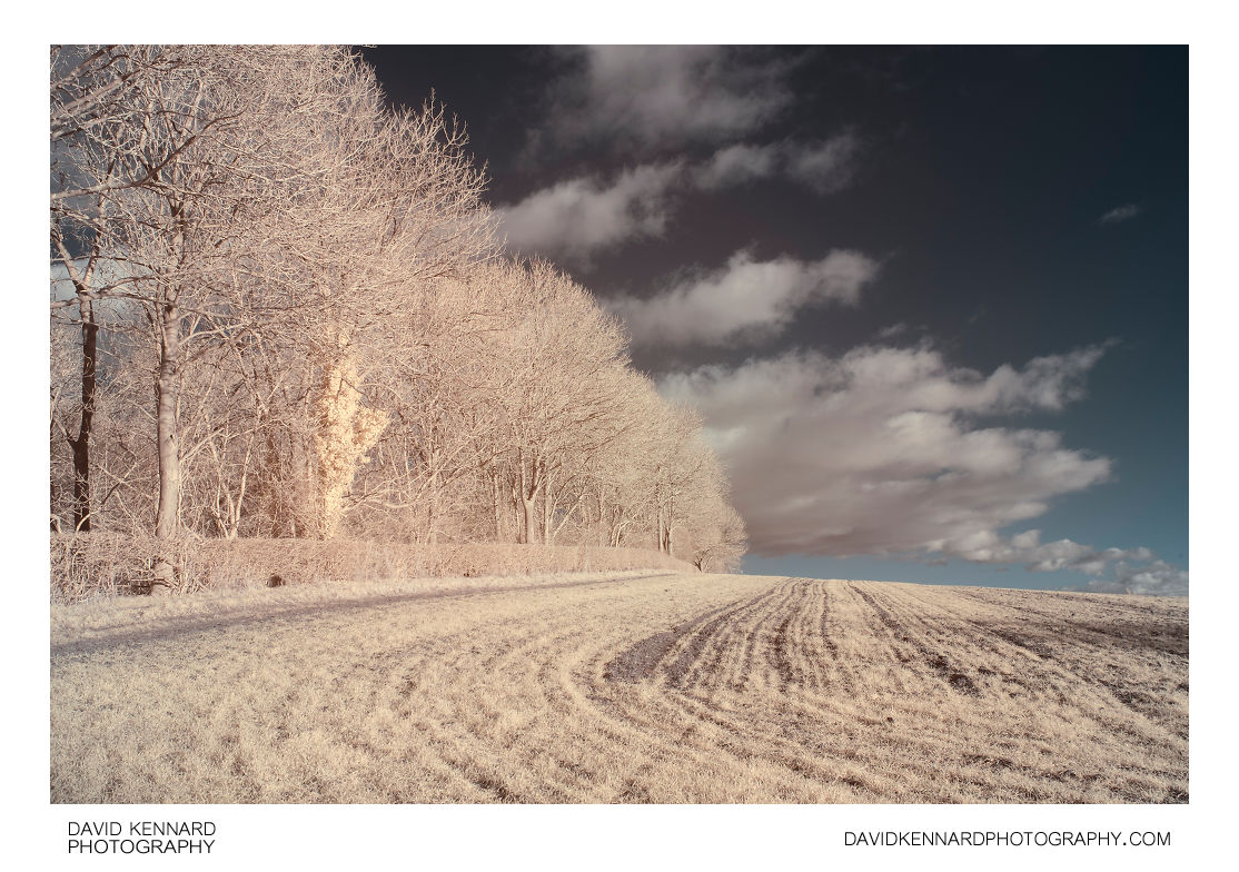 Field of shoots and bare winter trees in IR