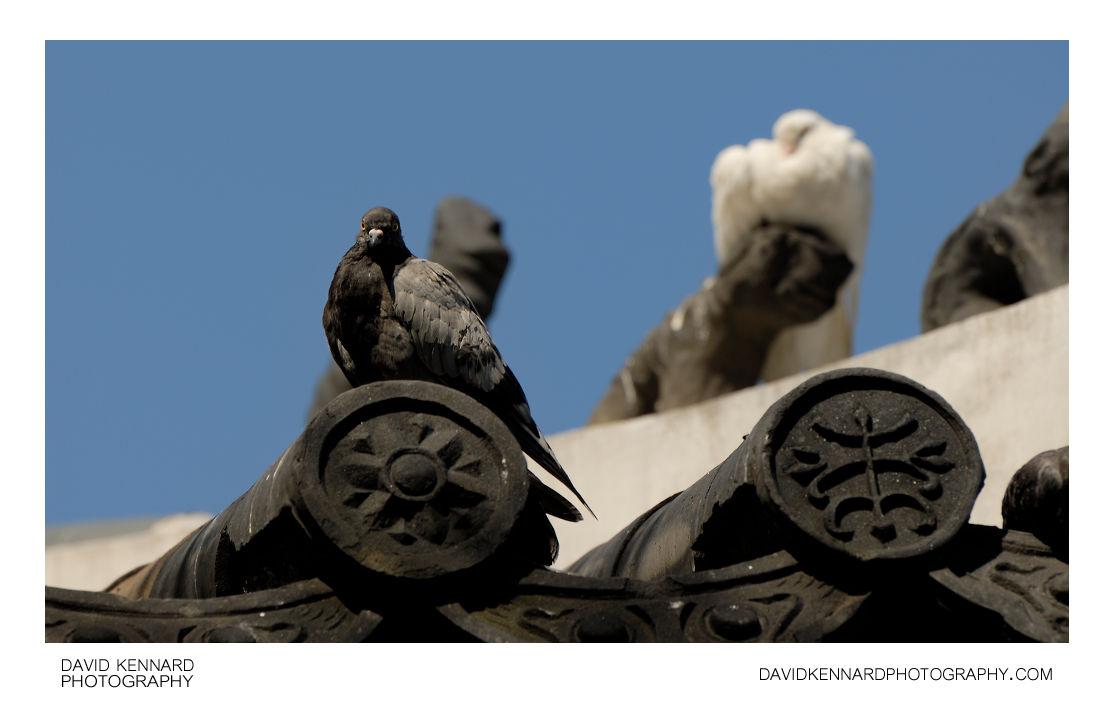 Pigeons on Palgak-jeong roof
