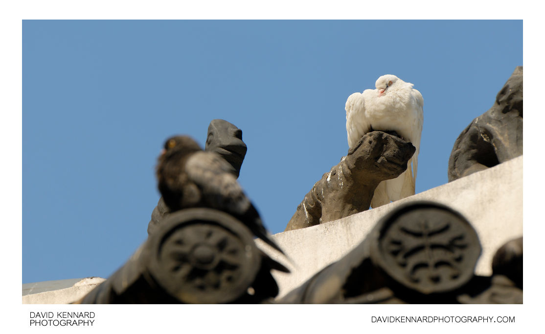Pigeons on Palgak-jeong roof
